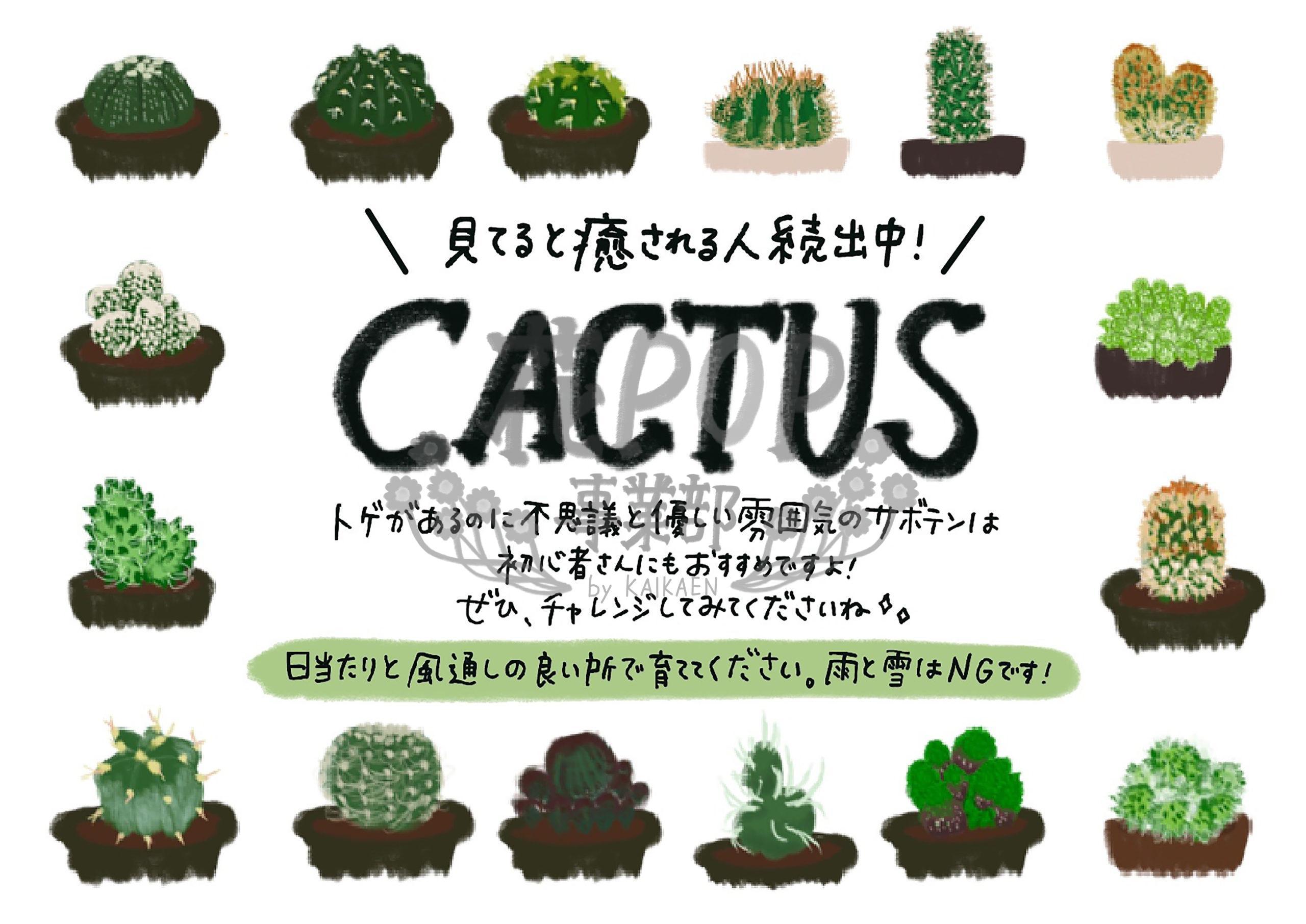 CACTUS サボテン