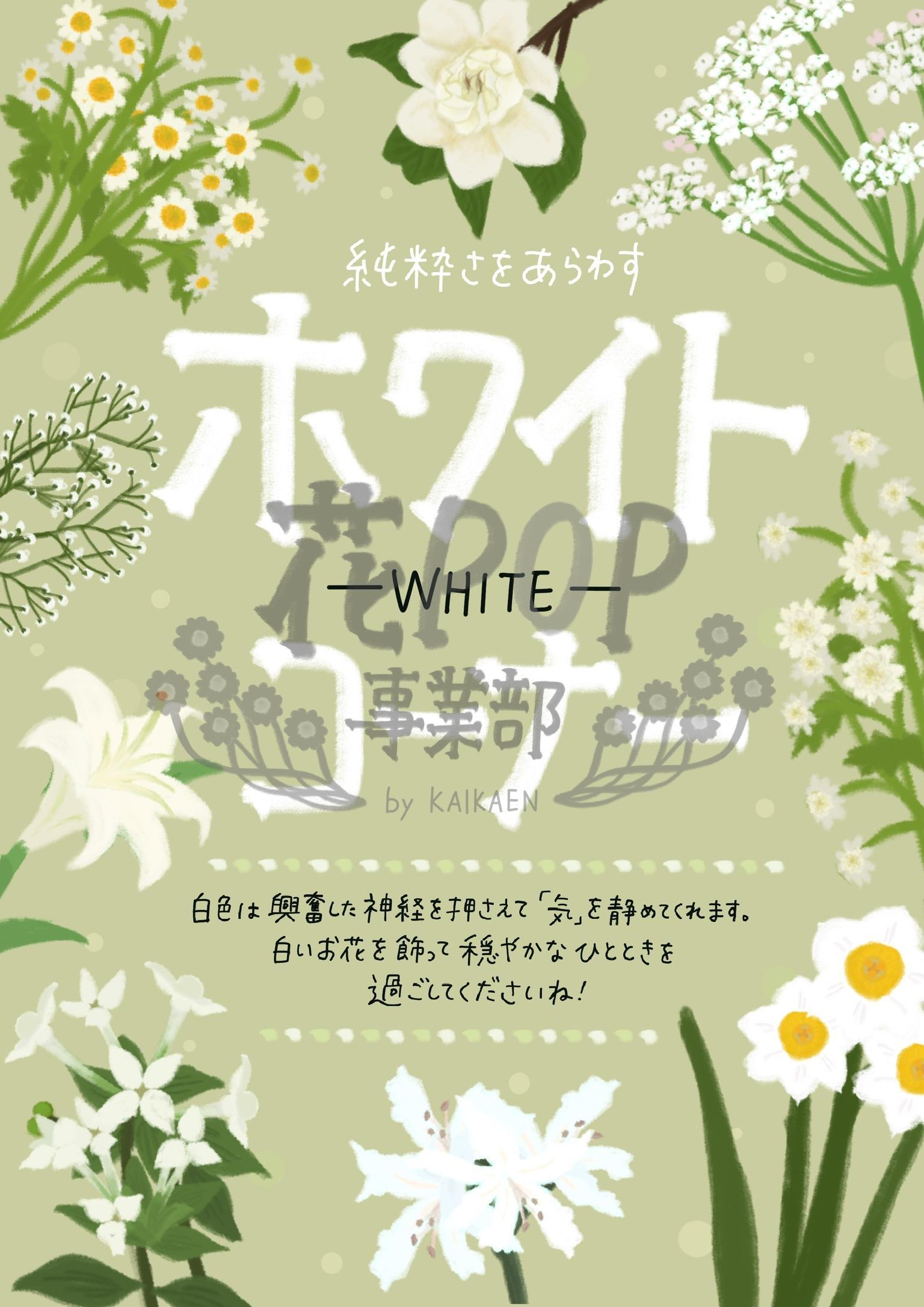 ホワイトコーナー